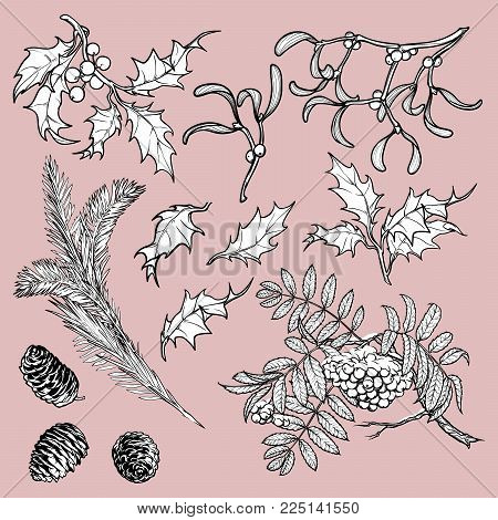 Hand drawn branches and leaves of temperate forest trees. Sketch floral set isolated on white background. Mistletoe, rowanberry, holly, Fir tree, cones and berries. EPS10 vector illustration