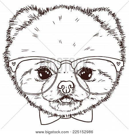 Black and white isolated pomeranian dog head with bow-tie and glasses. Vector hand drawn puppy face.