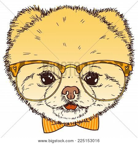 Pomeranian dog head with glasses and bow-tie. Vector isolated hipster puppy  illustration.
