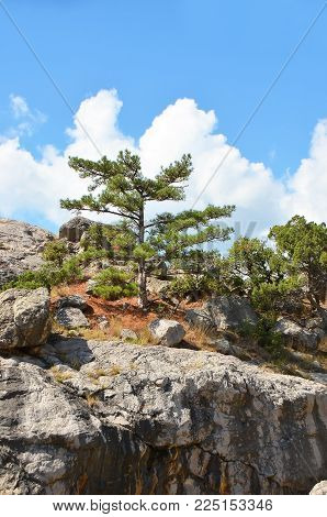 Rock Landscape With Juniper And Sky