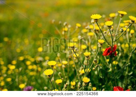 yellow beautiful flowers on a background of a field