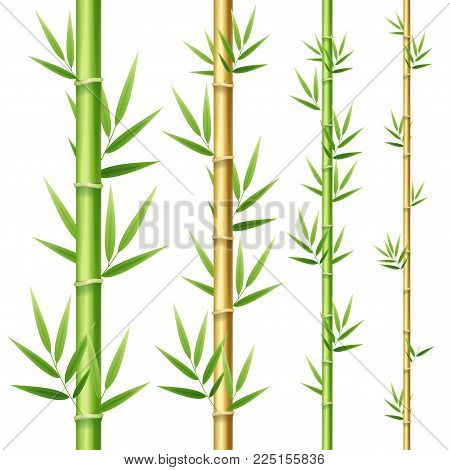 Realistic 3d Detailed Bamboo Shoots or Stick Stem Set Oriental Travel and Tourism Nature Element Design. Vector illustration