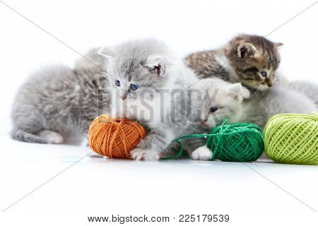 Small grey fluffy adorable kitten is playing with orange wool ball while other kitties are playing with green yarn balls jumping on in white photo studio. Little gray adorable amusing cute curious