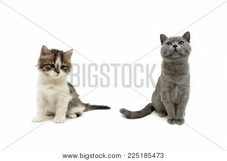 beautiful kittens isolated on white background. horizontal photo.