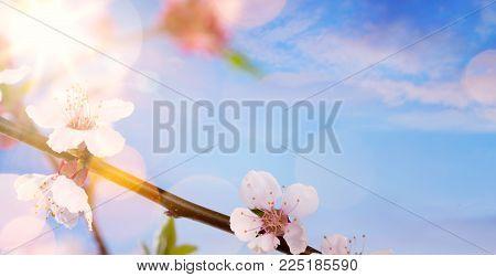 Art Spring Flower Background; Happy Easter Landscape