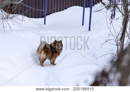 a dog on the street in winter. Portrait of a beautiful dog. Photo dog close-up. Winter dog on the street. Homeless animal.