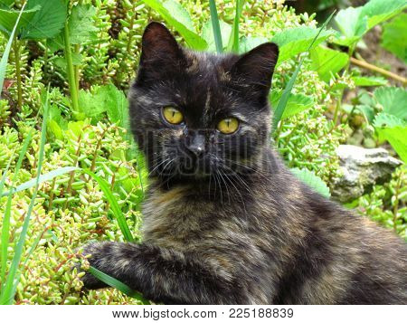 Cute brown kitten in grass. Beautiful cat portrait with yellow eyes