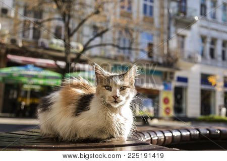 street cat sitting on a bench in the city center. urban ruffian cat. cute kitten.