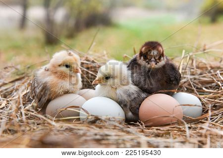 funny little colorful chickens with egg in egg box on Easter