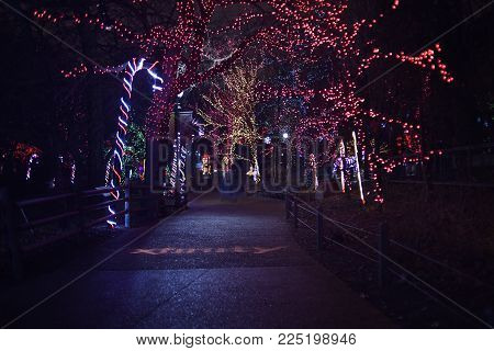 Giant Candy Canes and Trees illuminated with Christmas Lights for Lincoln Park Zoo Lights, Chicago, IL, December 13th, 2017