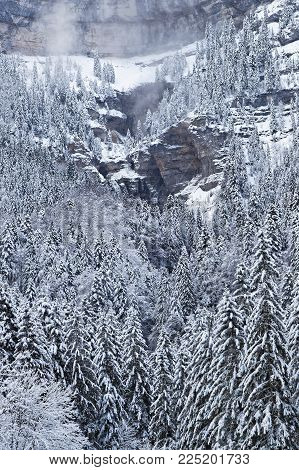 Winter landscape of a forest in French Alps