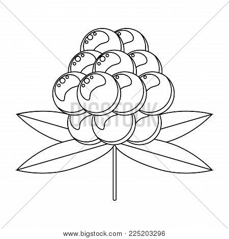 Coloring book for children. Vector illustration. berry cloudberry
