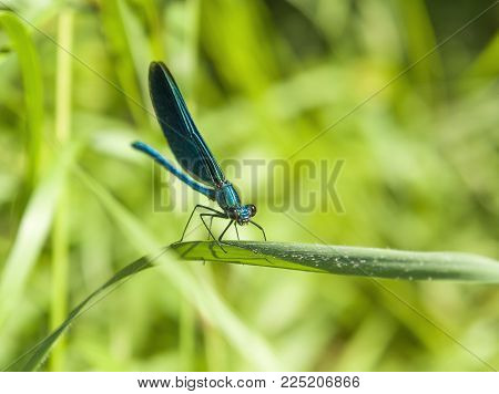 sideways closeup shot of a sunny illuminated dragonfly in green back