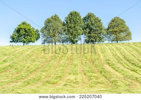 sunny scenery showing a hayfield with fruit trees at spring time in Hohenlohe, a area in Southern Germany