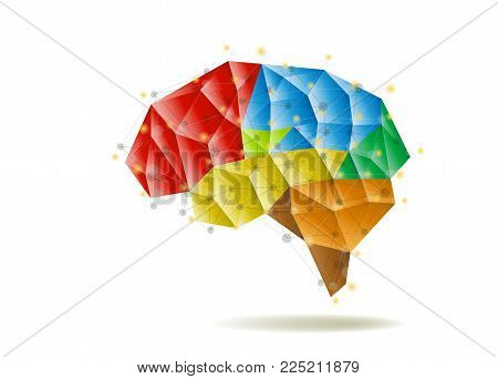 Human brain anatomy structure vector illustration in flat style. Structure of human brain