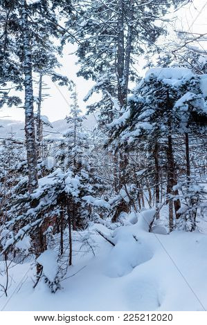Russian snow trees. Winter landscape on Falaza moutain