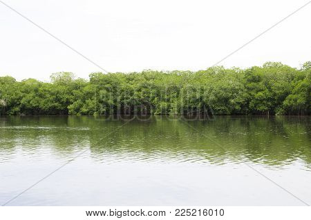 Vibrant Green Forest Foliage Woodland Trees