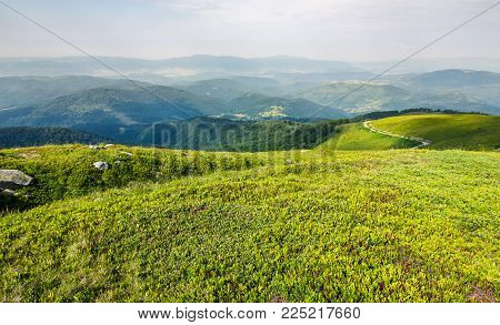 grassy carpet of the mountain meadow. beautiful summer landscape viewed from high altitude