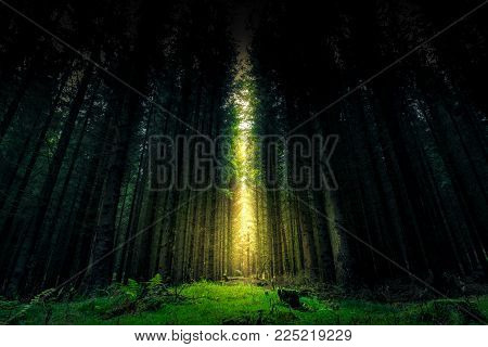 Beautiful mystical forest and sunbeam - Fantasy Wood Background