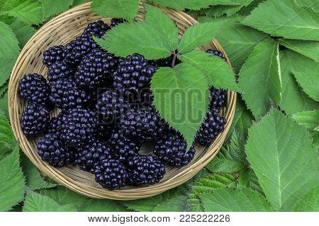 Wicker basket full of blackberries lying on the green leaves from blackberry