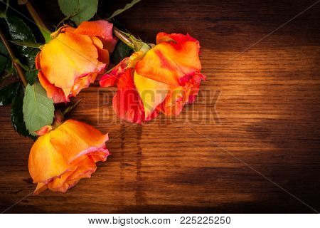 Fresh Roses on Wooden background. Selective focus.