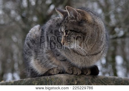The March cat sits on a stone fence.