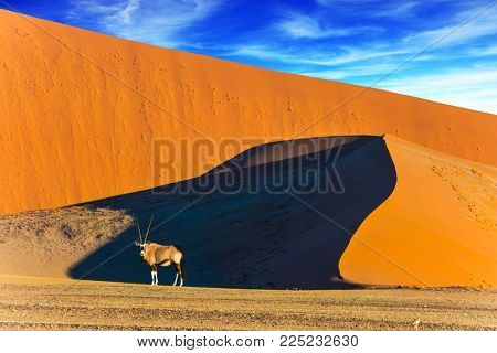Namibia, South Africa. Sunset in the desert. Oryx standing at the road. Sharp border of light and shadow over the crest of the dune. The concept of exotic and extreme tourism