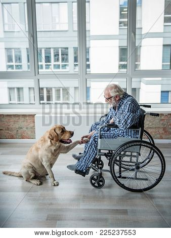 Tranquil Senior Man Looking At The Hound And Holding The Paw Of It. Hound Is Sitting Near The Chair.