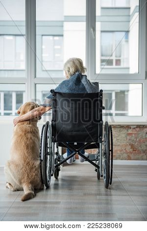 True friend. Mature female is sitting in invalid chair in front of the window in room. She is looking outside and hugging the dog. Concept of peace poster