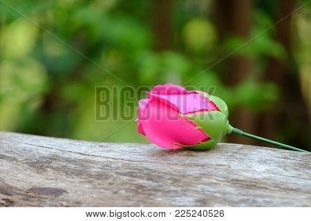 Close up a single pink rose bud on the timber at the park with blur green nature background and warm light for Valentine's Day concept