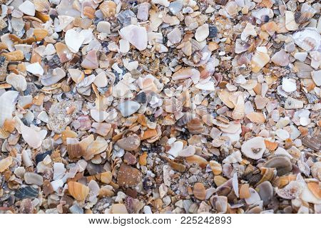 Shell shards on the seashore. For background or wallpaper Texture.