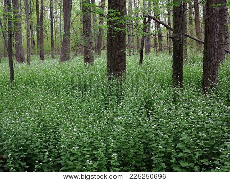 Line of Trees in Springtime - Edge of a green woodland with spring flowering plants.