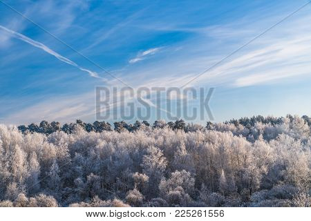 Frosty Trees in the Forest under Blue Sky with Clouds