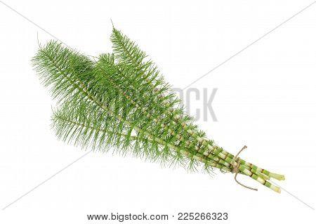 Horsetail ( equiseto arvense ) isolated on white background
