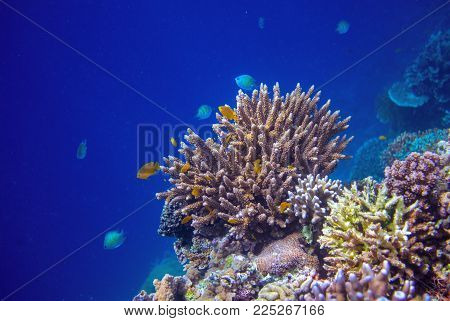 Tropical seashore underwater landscape. Coral reef wall in open sea water. Coral reef underwater photo. Sea snorkeling or diving banner template. Seaside summer vacation activity. Aquarium background