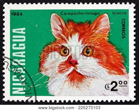 Nicaragua - Circa 1984: A Stamp Printed In Nicaragua Shows Tortoiseshell Cat, Domestic Cat, Circa 19