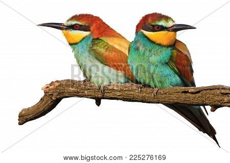amorous pair of birds on a white isolation , love and bright colors