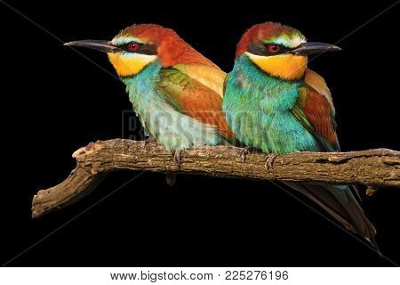 love couple in birds isolated on black , love and bright colors