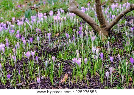 Spring flowers emerging at Birmingham Botanial Garden