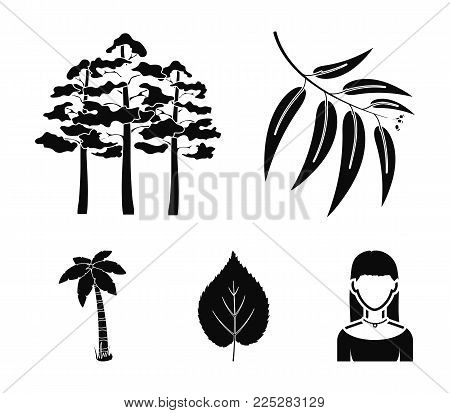 Branch zucalyptus, pine, leaf, palm.Forest set collection icons in black style vector symbol stock illustration .