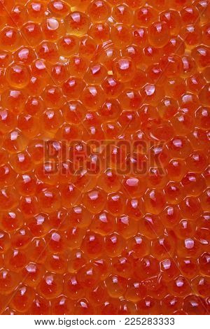 Red caviar studio photo. Caviar texture pattern background food closeup wallpaper. Healthy sea food. Orange or red luxury caviar as background..