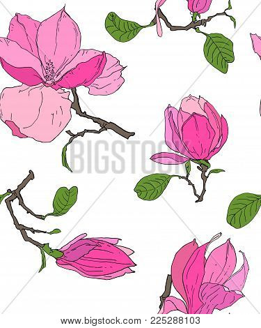 Seamless Floral Pattern. Magnolia Flowers and Leaves. Summer and Spring. Vector sketch botanical seamless with hand drawn magnolia branche and flower in vintage style