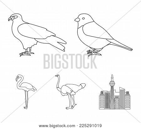 Sparrow and other species. Birds set collection icons in outline style vector symbol stock illustration .