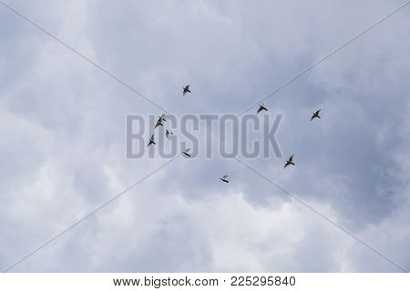 Ten white fluffy purebred dovesfly in cloudy sky on wedding day