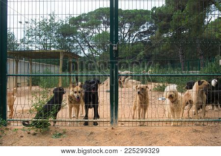 Dog shelter with dogs behind the fence