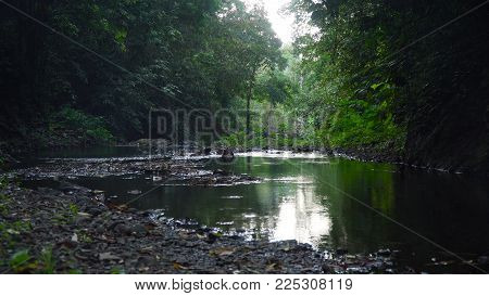 River flows through the rainforest in the jungle. Bali, Indonesia. Tropical river, jungle. Tropical Rainforest Landscape.
