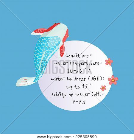 Features of Asagi Carp Koi, traditional sacred Japanese fish, element for creating your own infographic design with handwritten text, colorful vector Illustration.