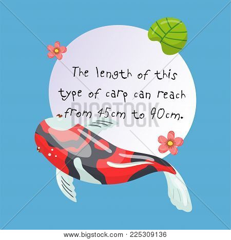 Features of Shova Carp Koi, traditional sacred Japanese fish, element for creating your own infographic design with handwritten text, colorful vector Illustration.