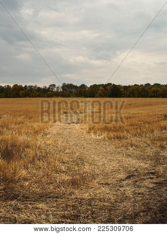 Vertical views of a field with stubble, autumn landscape with dramatic sky. Nature, rural view of farmland and plants in the beautiful surroundings.