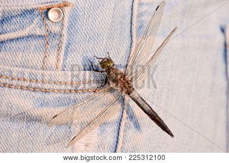 Photo Picture of a Dragonfly Anax imperator